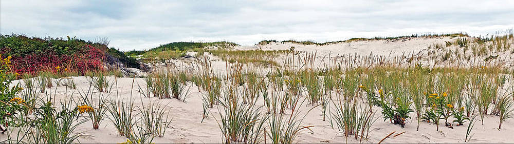 In The Dunes by William Walker