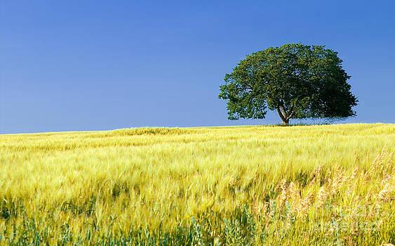 In the Field by Bob Mintie