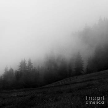 In the fog by Anita Kovacevic