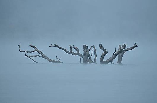 In the Fog by Brooke Clark