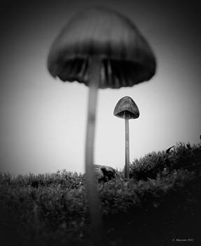 In the land of Mushrooms by Cindy Marcotte