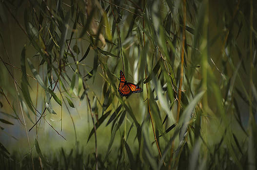 Mario Celzner - in the memory of Papillon