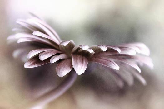 In the Mist by Darlene Kwiatkowski