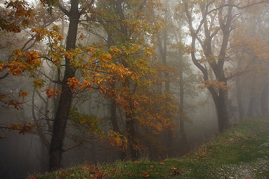 In The Mist by Dimitris Lillis