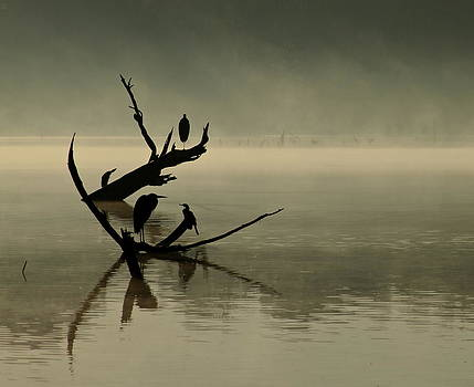 In the Mist by Lisa Comperry