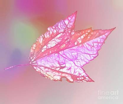 Linda Rae Cuthbertson - In the Pink Maple Leaf Pastel Pink
