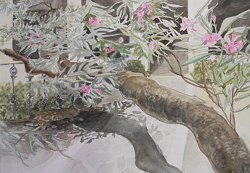 In the Shade of Rhododendrons by Jan Eckardt Butler
