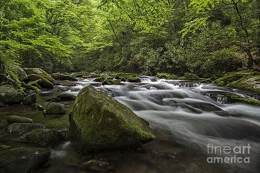 In the Smokies. by Itai Minovitz