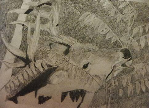 In the sumac by Sarah Hardin