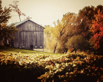 Lisa Russo - In the Vineyard - Barn Landscape