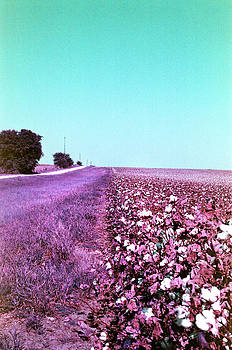In Them Old Cotton Fields Back Home - 001 by Lon Casler Bixby