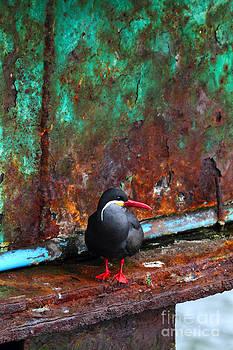 James Brunker - Inca Tern on Pier