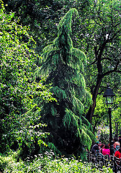 Incredible tree Washington Square Park NYC by Anne Ferguson