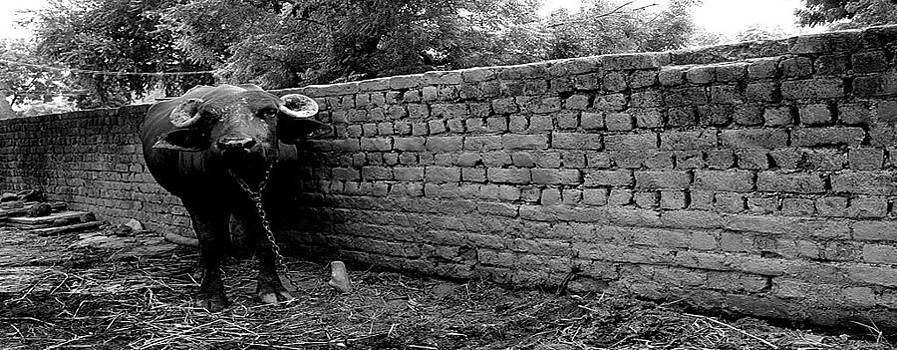 India 2006 6 by Tom Chambers