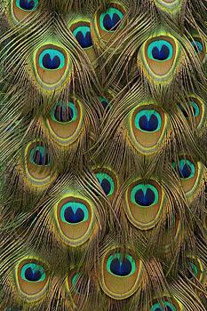 Hiroya Minakuchi - Indian Peacock Feathers