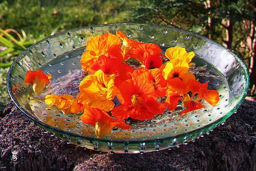 Indian summer in my garden 02 by Li   van Saathoff