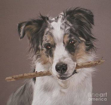 Indy - Border Collie by Joanne Simpson