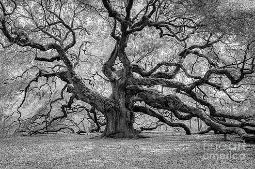Dale Powell - Infrared Angel Oak