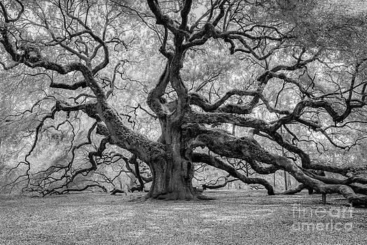 Dale Powell - Infrared Angel Oak