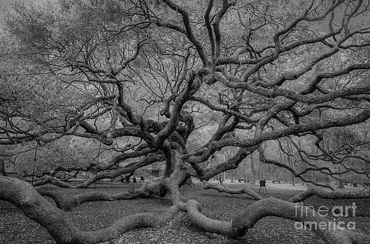 Dale Powell - Infrared Angel Oak Tree