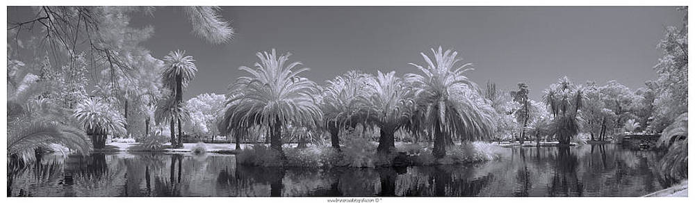 Bruno Rosa - Infrared on a sunny afternoon