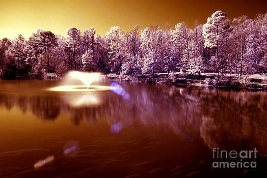 Infrared Study #242 by Floyd Menezes