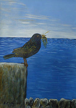 Inis Meain 16 Starling by Roland LaVallee