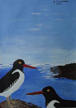 Inis Meain 21 Oyster Catchers by Roland LaVallee