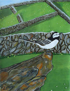 Inis Meain 26 Wagtail by Roland LaVallee