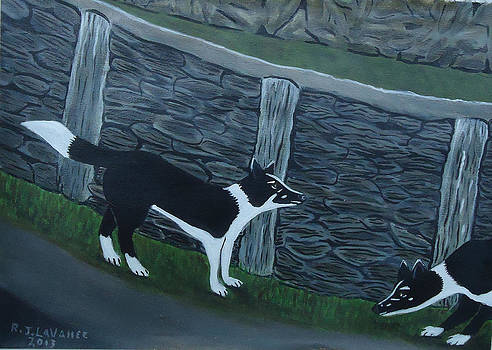 Inis Meain 9 Working Dogs by Roland LaVallee