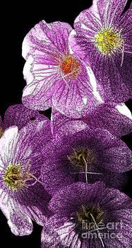 Linda Shafer - Inked In Purple