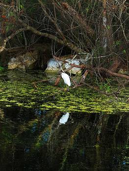 Inmature Snowy Egret by Bill Marder