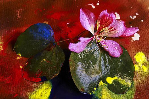 Inner joy by Rohan Sandhir