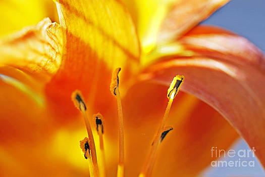 Inner Orange by Robin Clifton