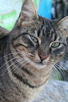 Tracey Harrington-Simpson - Inquisitive Tabby Cat With Green Eyes
