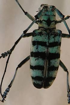 Insect by Marigan O'Malley-Posada