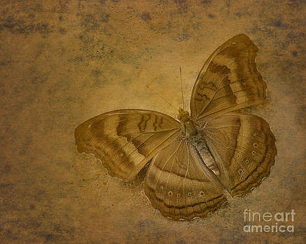 Insect Study Number 94 by Floyd Menezes