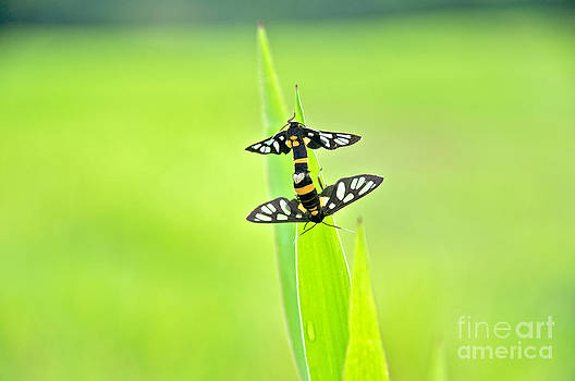Insects unite on green leaf by Vorakorn Kanokpipat