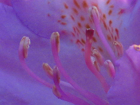 Inside a Rhodoendron by Alex  Call