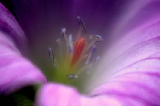 Inside Beauty by Riad Belhimer