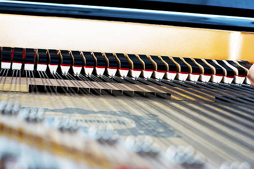 Newnow Photography By Vera Cepic - Inside of a piano mechanism