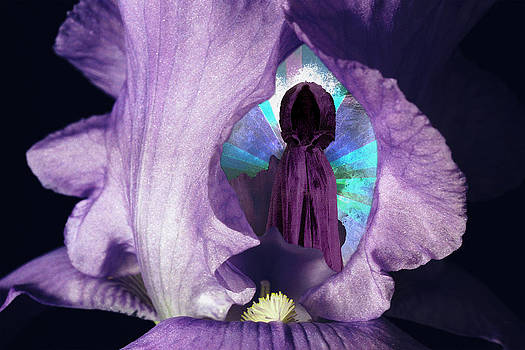 Inside the Iris by Lisa Yount