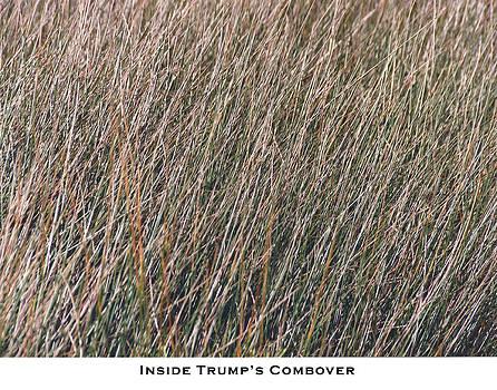 Inside Trump's Combover by Lorenzo Laiken