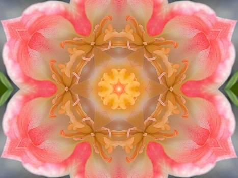 Inside Tulip Mandala by Diane Lynn Hix