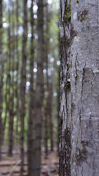 Dawn Hagar - Into the Forest