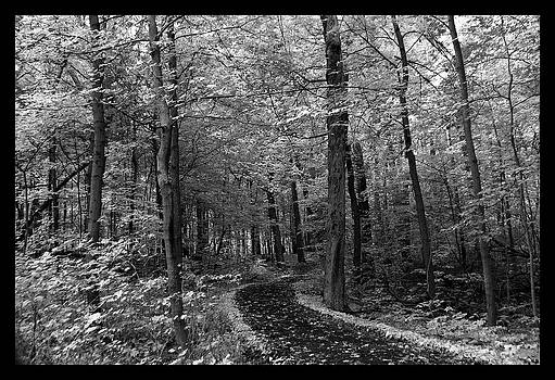 Rosanne Jordan - Into the Forest in Black and White