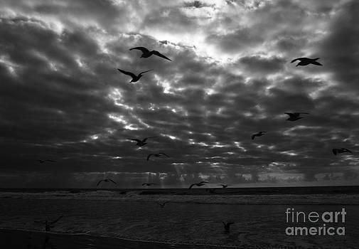 Del Mar Light by John F Tsumas