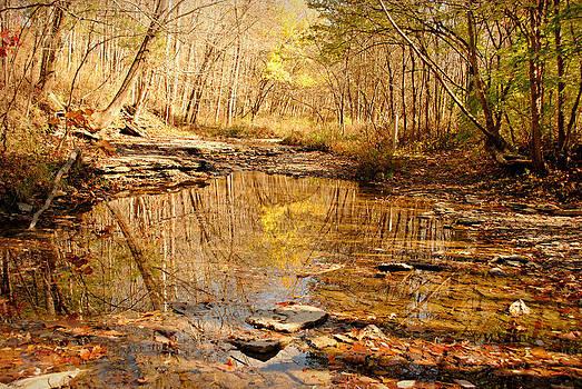Into the Quiet Autumn Woods by Amanda Lomonaco