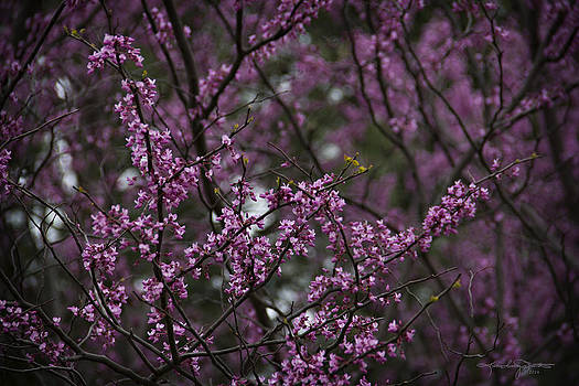 Into the Violet Woods by Karen Casey-Smith