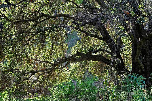 Susan Wiedmann - Into The Woods